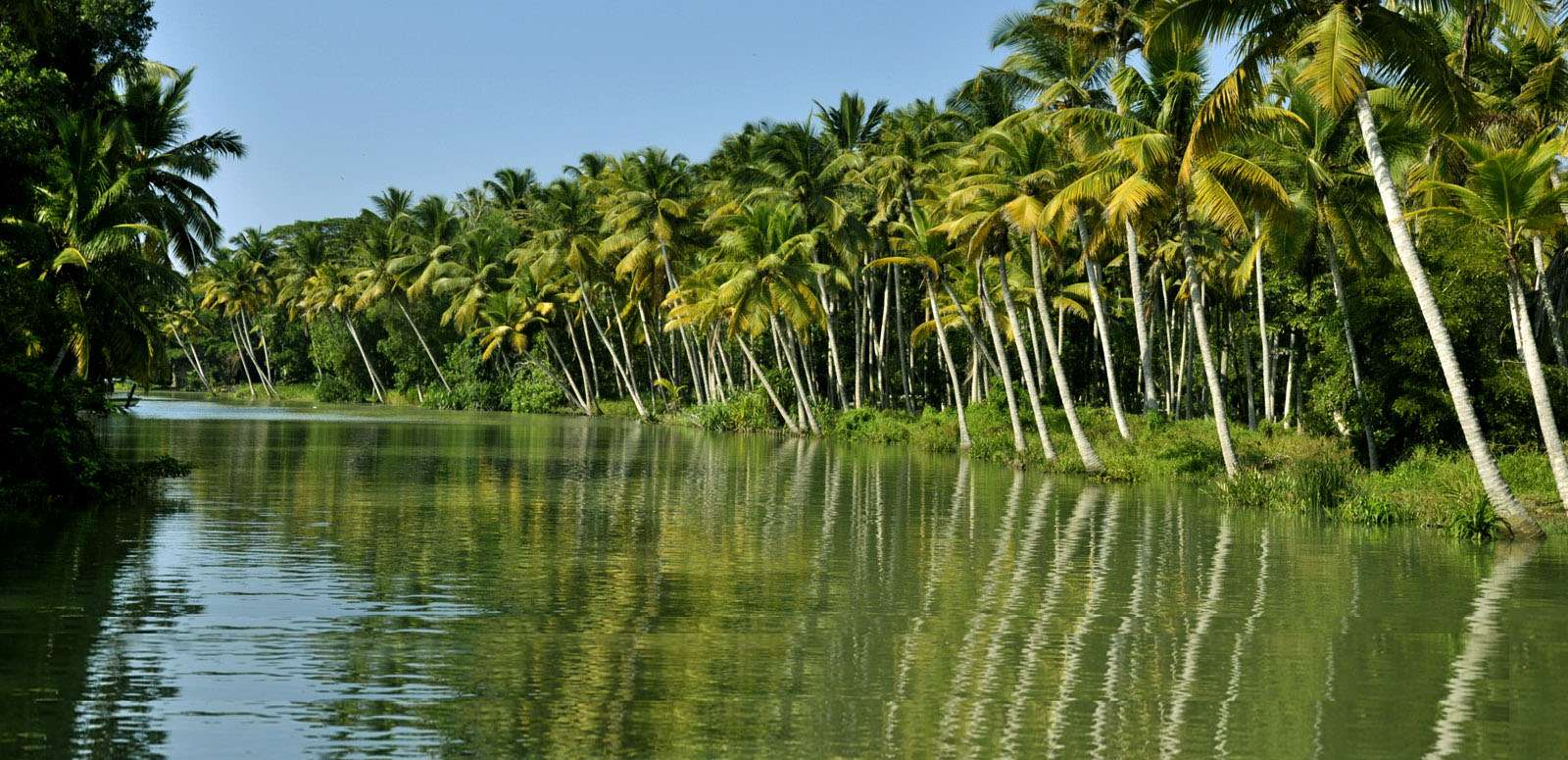 backwater cruise in kerala