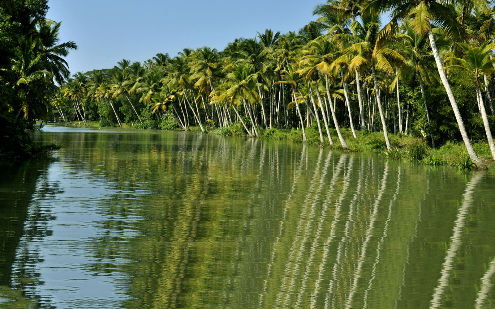 backwater cruise in kerala, poovar honeymoon and bird watching cruises